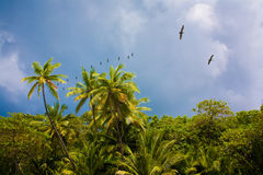 Palm Tree Forest Royalty Free Stock Photos