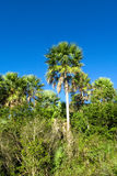 Palm tree forest in tropics Stock Images