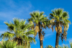 Palm tree forest in tropics Stock Photo