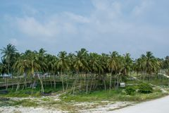Palm tree forest in the village at the tropical island Maamigili. In Maldives royalty free stock photo