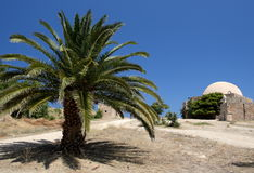 Palm tree in the Fortezza Stock Images