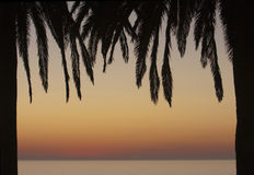 Palm Tree Frame Royalty Free Stock Images
