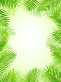 Palm tree frame background Stock Photos
