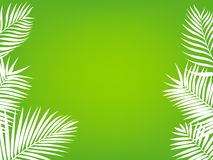 Palm tree frame background Royalty Free Stock Images