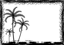 Palm tree and frame Stock Image