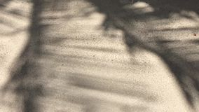 Palm tree frond shadows on sand stock video footage