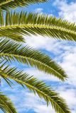 Palm tree fronds against sunny summer sky. Palm tree fronds against sunny cloudy summer sky at Kavala, Greece stock photo