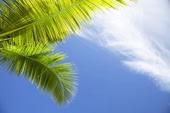Palm tree fronds against blue sky with white clouds in the Caribbean. Palm tree fronds in Dominican Republic against blue sky with white clouds royalty free stock image