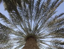 Palm Tree Fronds in Perspective Royalty Free Stock Photography