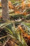 Palm tree fronds Stock Photo