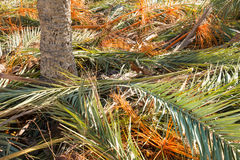 Palm tree fronds Stock Photography