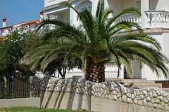 Palm tree in front of a family house and wall. Palm tree in front of a family house stock image