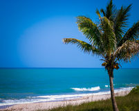 Palm tree in front of gorgeous blue ocean and beach Royalty Free Stock Photography
