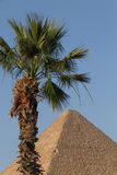 Palm tree in front of Great Pyramid. In Giza, Egypt Stock Photography
