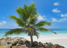 Palm tree in front of ocean Stock Images