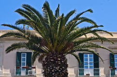 Palm tree in front of typical italian house at Syracuse, Sicily Stock Image