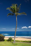 Palm tree in front of Ulua Beach, south Maui, Hawaii, USA. Palm tree at Ulua Beach, south Maui, Hawaii, USA Royalty Free Stock Photo