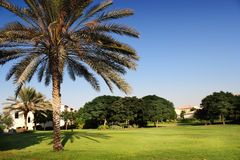 Palm tree in the garden. Villa and palm tree in comunity garden Royalty Free Stock Photography