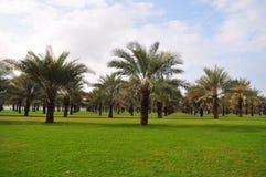 Palm Tree Garden Stock Photo