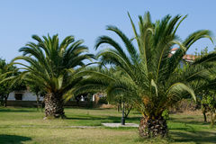 Palm tree garden Royalty Free Stock Photo