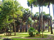 Palm tree garden against blue sky. Landscape view from Lanta island, Krabi, Thailand stock images