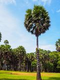 Palm tree garden against blue sky. Landscape view from Lanta island, Krabi, Thailand royalty free stock image