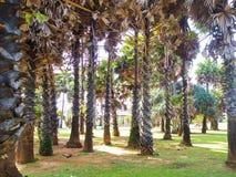 Palm tree garden against blue sky. Landscape view from Lanta island, Krabi, Thailand stock image