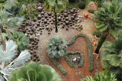 Palm tree garden Stock Images