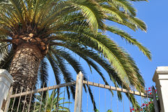 Palm tree in garden Royalty Free Stock Photography