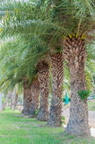 Palm tree in the garden Stock Photos