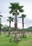Palm tree in garden Stock Photo