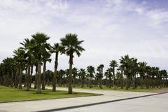 Palm Tree garden Stock Photography