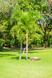 Palm tree in the garden Stock Photo