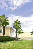 Palm tree garden near the sea and blue sky view stock images