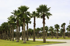 Palm Tree garden in the park Royalty Free Stock Photo