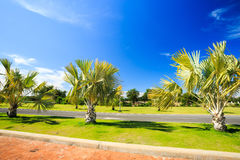 Palm tree garden under blue sky Stock Images