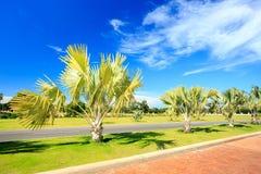 Palm tree garden under blue sky Royalty Free Stock Image