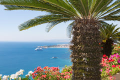 Palm tree and geranium flowers with seascape at Sicily Stock Image