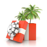 Palm tree from the gift box Stock Photography