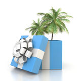 Palm tree from the gift box Stock Image