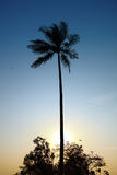 The Palm Tree, Goa Royalty Free Stock Photography