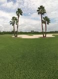 Palm tree and golf course