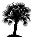 Palm Tree and Grass Silhouettes Stock Image