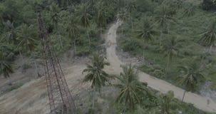 Palm tree gravel road stock video