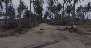Palm tree gravel road stock video footage