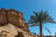 Palm tree and the great Sandy mountain in clear weather Royalty Free Stock Image