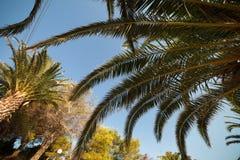 Palm tree Greece resort Stock Photo