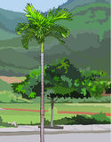 Palm tree on a green background Royalty Free Stock Photos