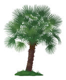 Palm Tree and Green Grass Stock Photos