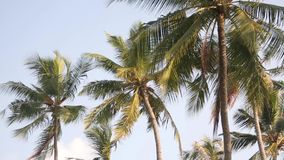 Palm tree with green leaf and sun ray on tropical Maldives island, exotic place stock video footage
